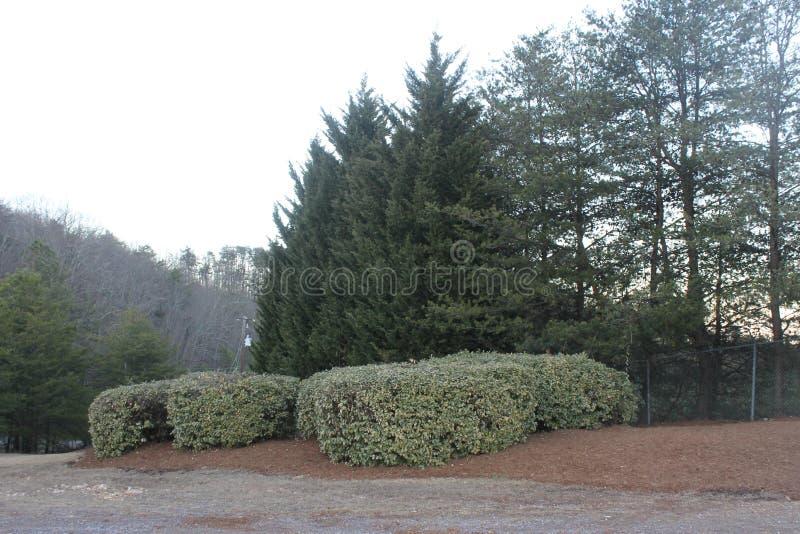 公园杉木和灌木的绿色庭院 图库摄影