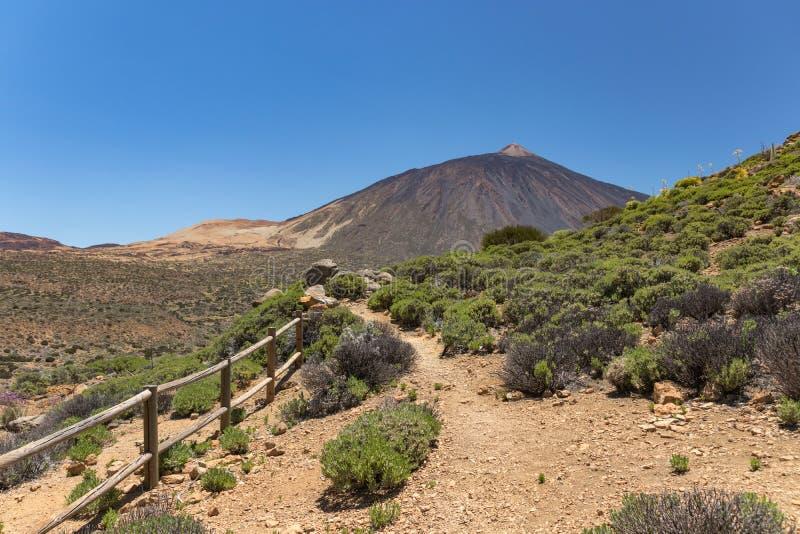 公园泰德峰山风景夏时的 沿山坡的走的足迹与地方性植被,火山泰德峰在 图库摄影