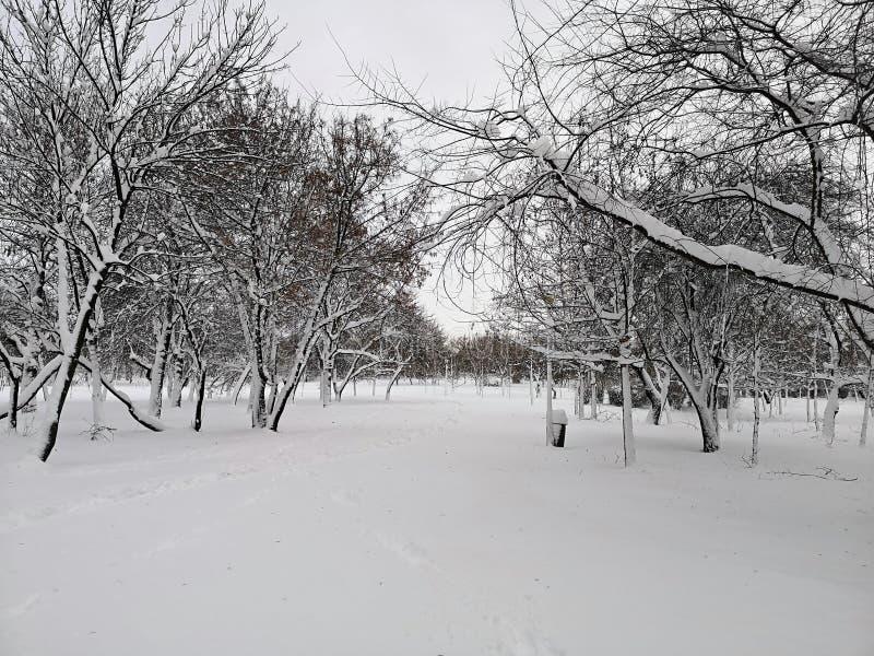 公园的灰冬 孤独感 免版税图库摄影