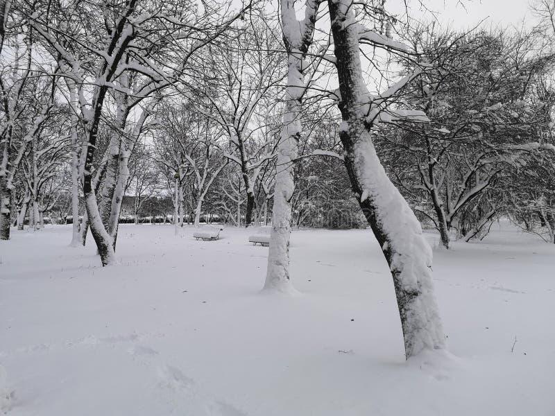 公园的灰冬 孤独感 图库摄影