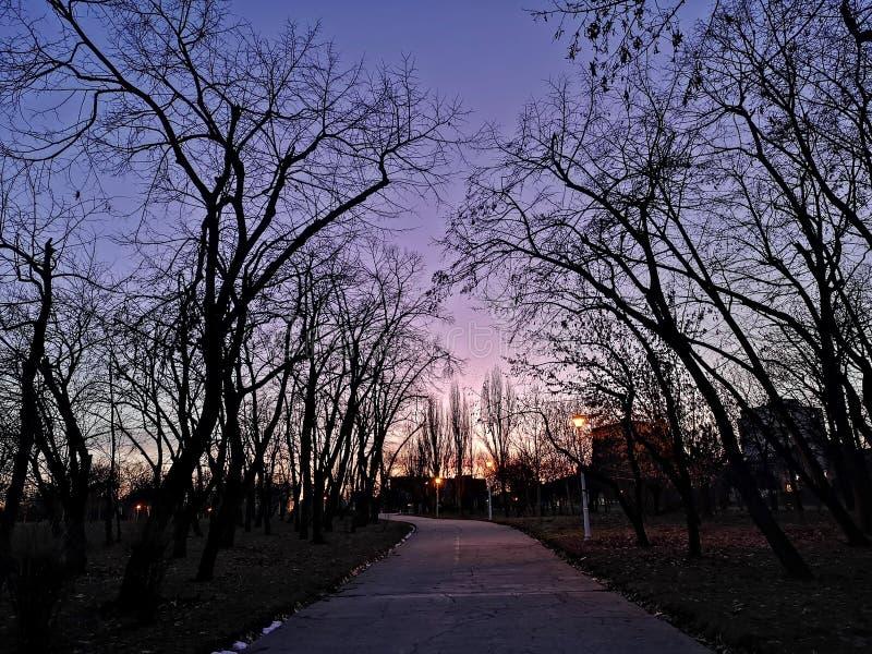 公园紫色夕阳树影 免版税库存图片