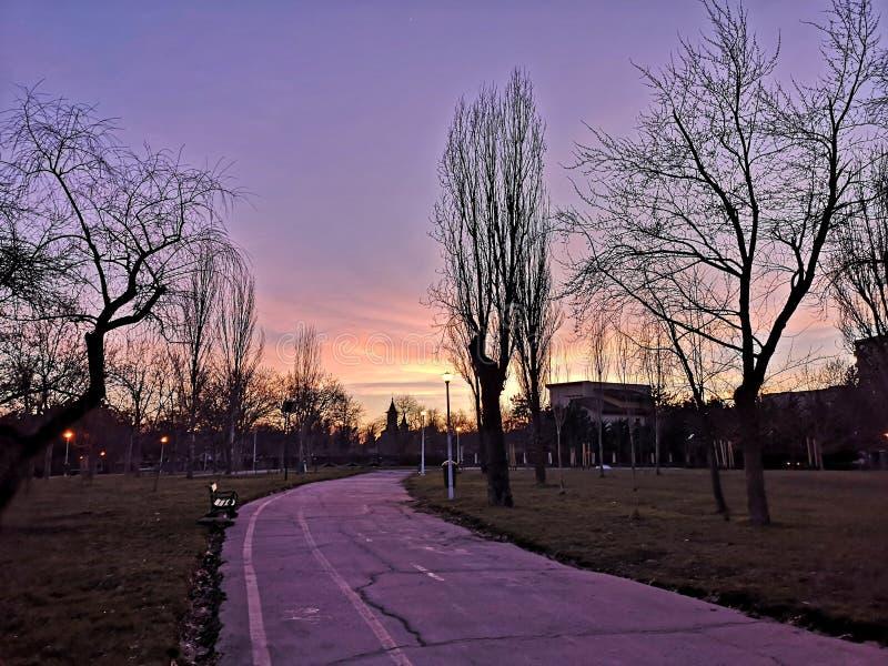 公园紫色夕阳树影 库存照片