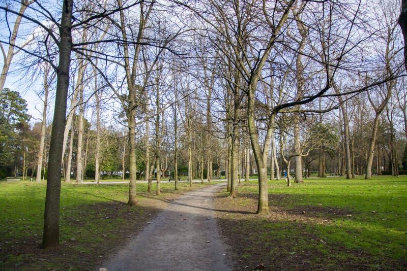 公园细节101 免版税图库摄影