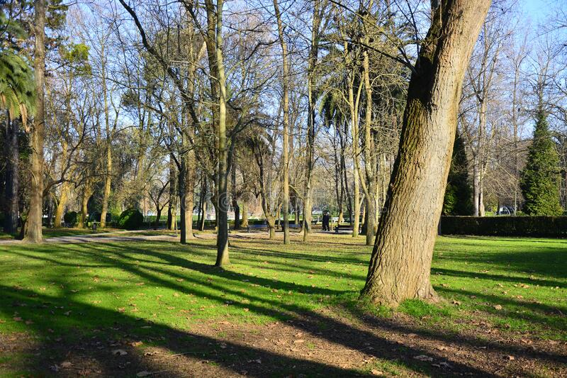 公园细节98 免版税图库摄影