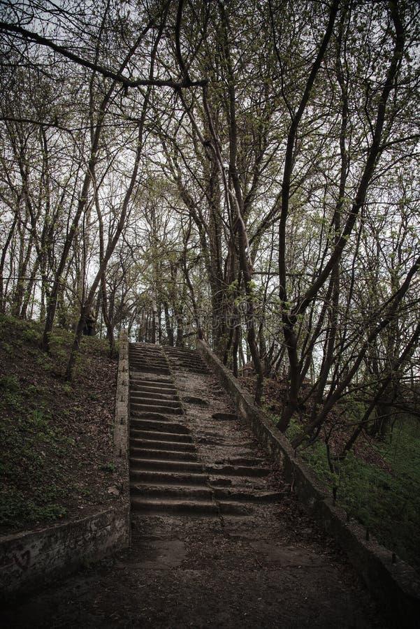 公园里老楼梯,破败破败,台阶草丛生 阴郁的神秘色彩 破坏概念 免版税库存照片