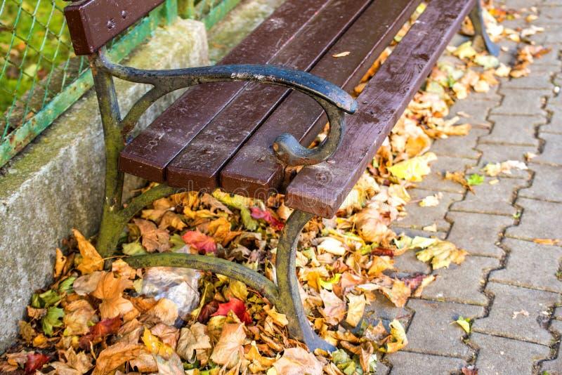 公园长椅在秋季太阳的一个城市 库存图片