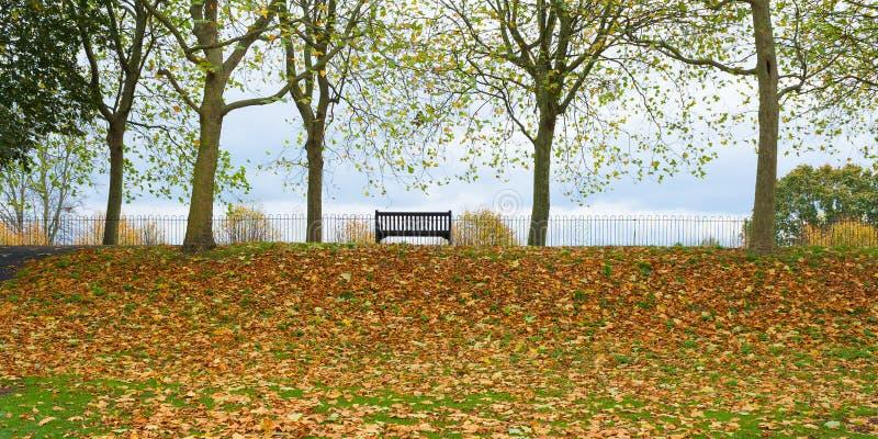 公园长椅 库存图片