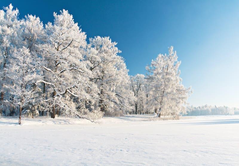 公园雪冬天 库存照片