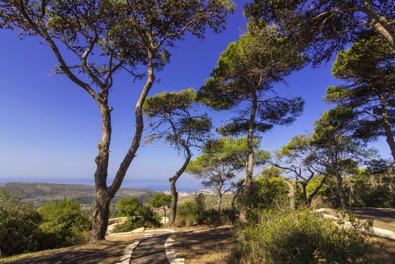 公园Carmel 免版税库存图片