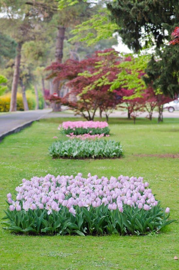 公园sigurta维罗纳意大利的看法 免版税图库摄影