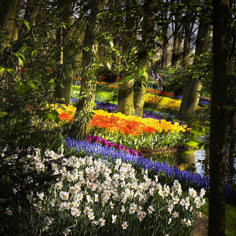 公园springflowers 免版税库存图片