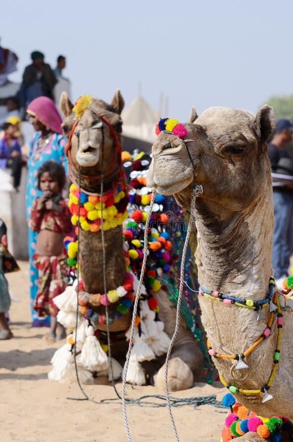 公平地参与在著名骆驼的美丽的装饰的阿拉伯骆驼在普斯赫卡尔,塔尔沙漠 免版税图库摄影