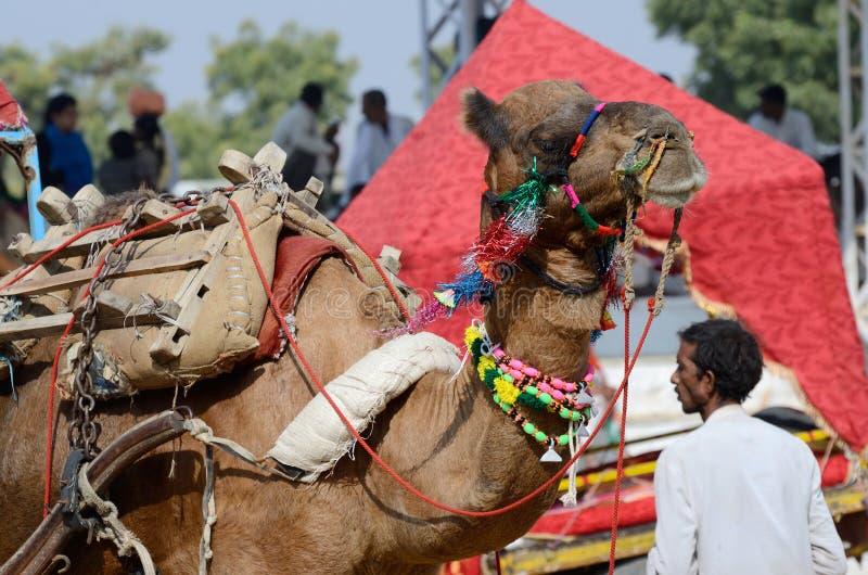 公平地参与在著名骆驼的美丽的阿拉伯骆驼,印度 免版税图库摄影
