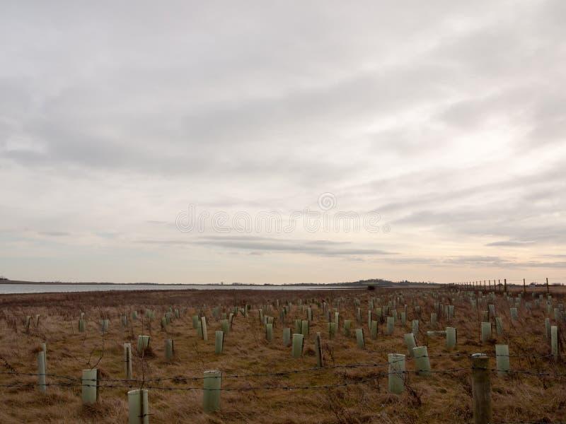 公海与草的海岸平原在清楚前面天际的阴云密布 图库摄影