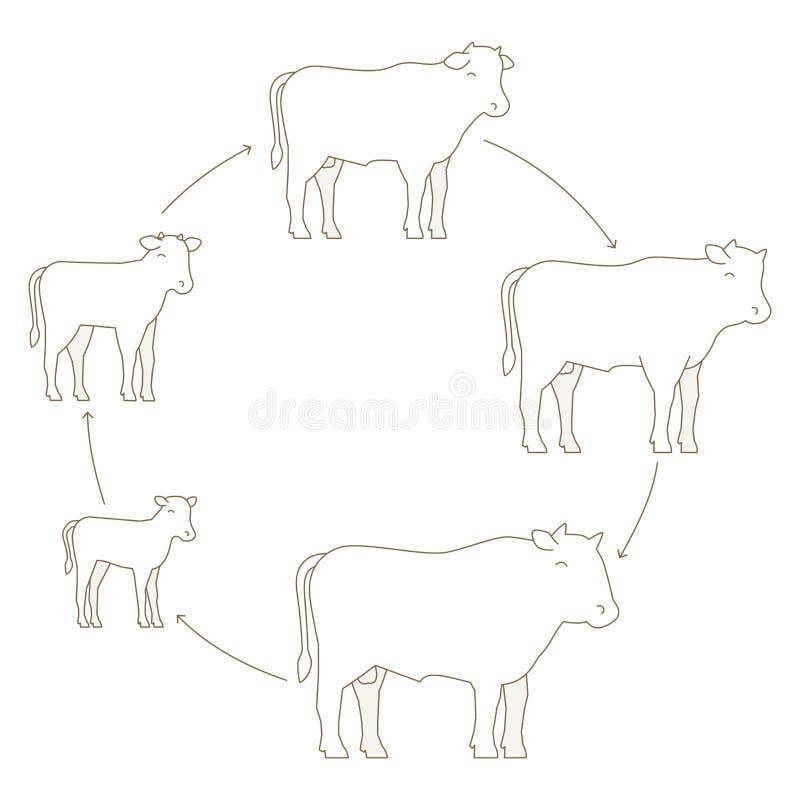 公牛动物农场 阶段发牢骚成长集合 助长牛肉生产 养牛业 小牛长大动画进步 皇族释放例证