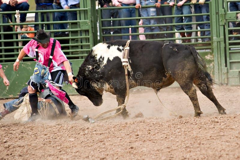 公牛骑马 图库摄影