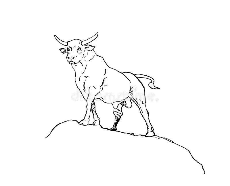 公牛 图库摄影