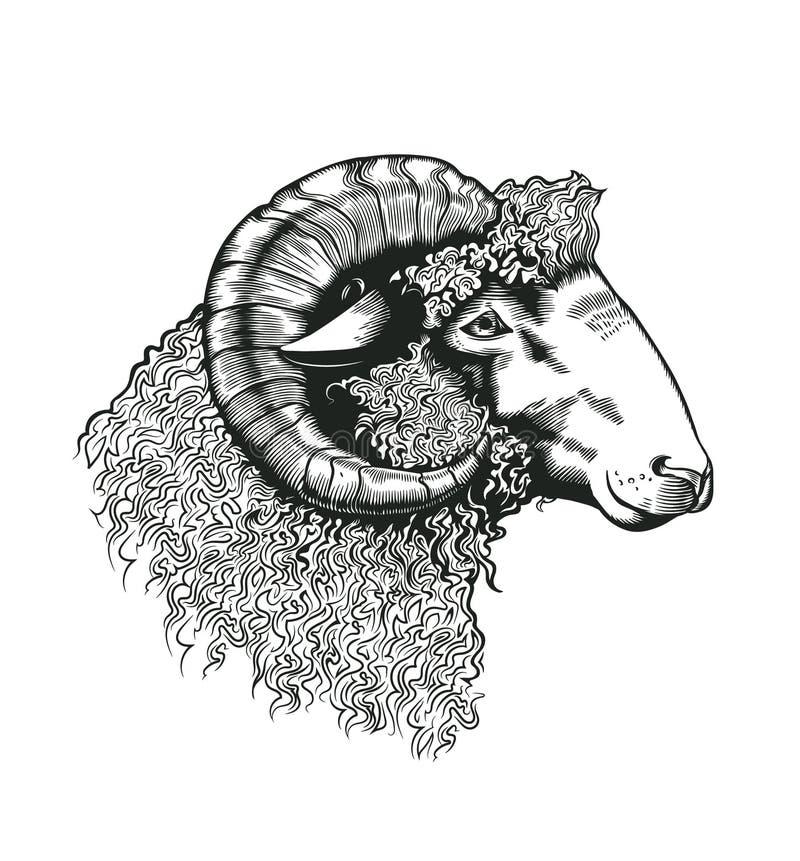 公羊头手拉在古色古香的蚀刻样式 在白色背景隔绝的家畜动物 在黑白照片的传染媒介例证 皇族释放例证