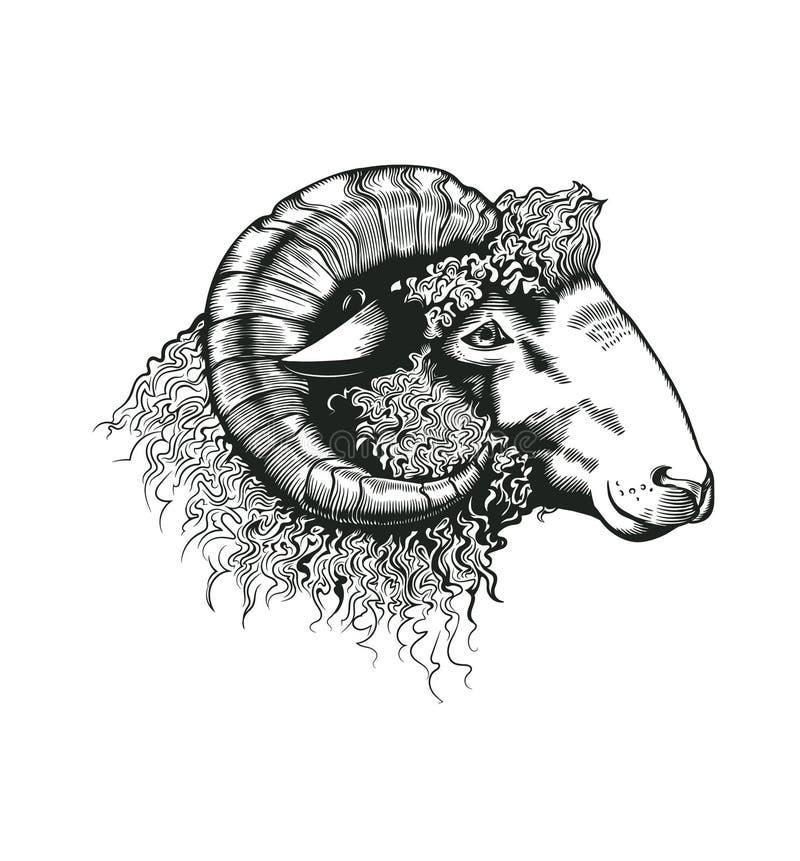 公羊头手拉在古色古香的蚀刻样式 在白色背景隔绝的家畜动物 在.CS和.EPS10的传染媒介例证 库存例证
