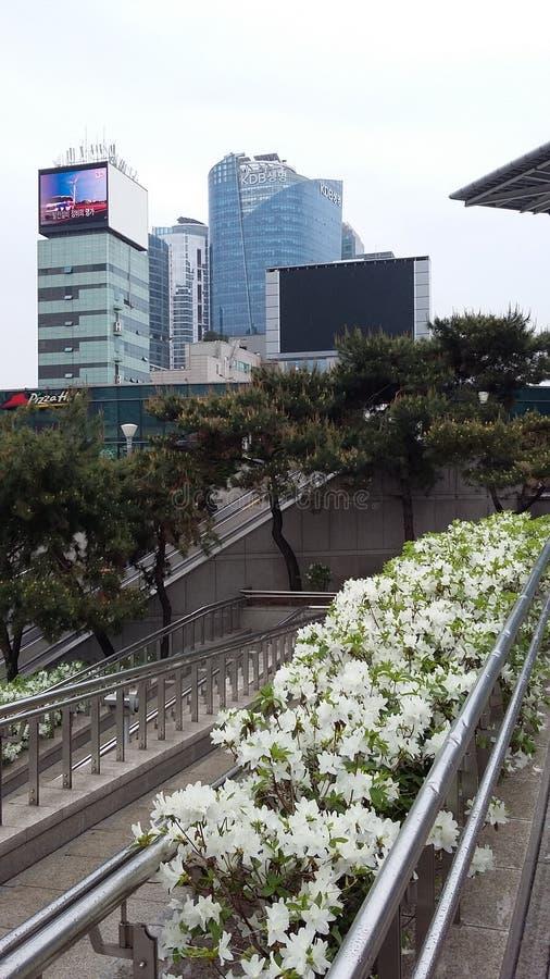 公车运送韩国附近停放的河汉城南日落 免版税库存图片