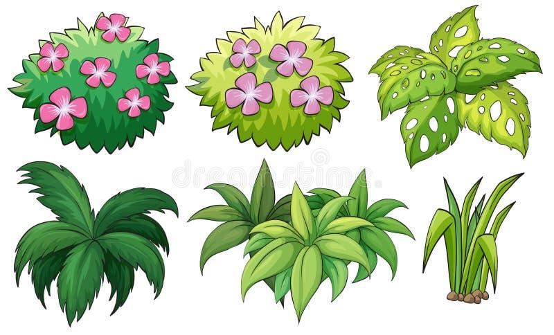 六个园林植物 皇族释放例证