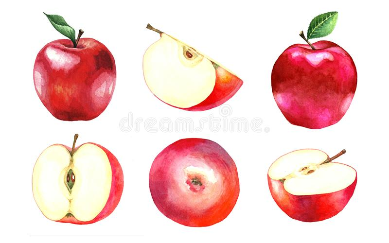 六个水彩红色苹果的一汇集 图库摄影