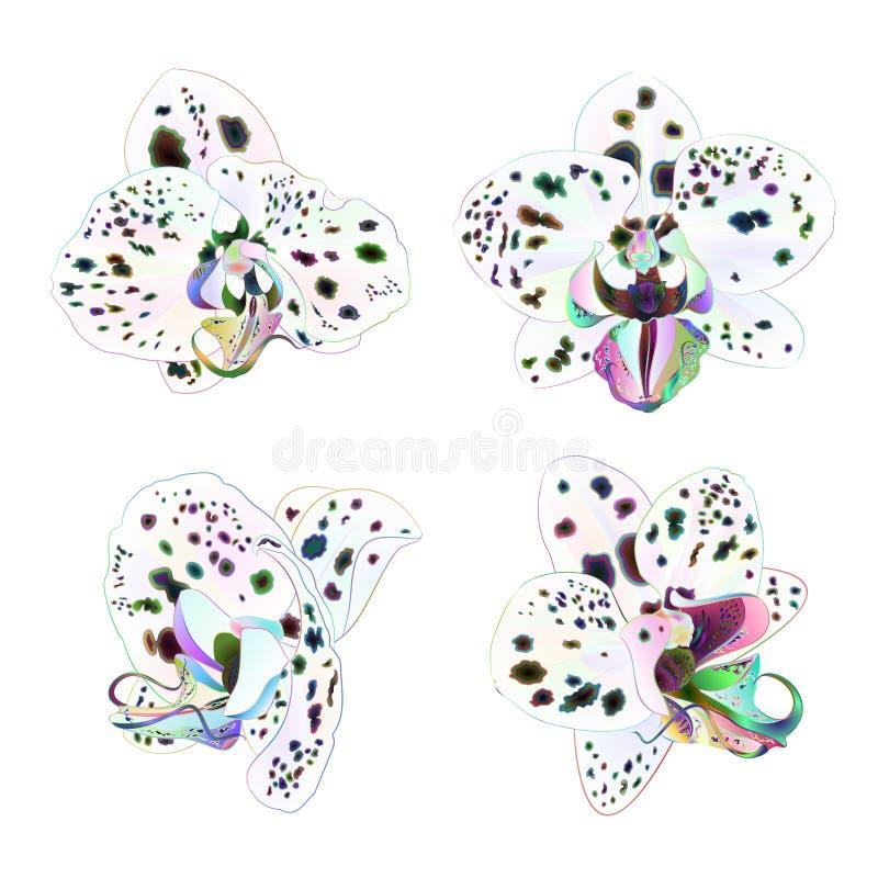 兰花兰花植物与在白色背景葡萄酒传染媒介的小点多色的特写镜头美丽的花被隔绝的集合秒钟 向量例证
