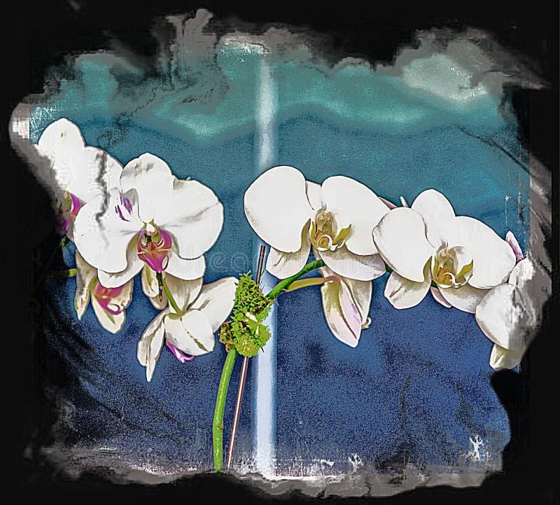 兰花是俏丽的作为一张图片在任何设置和在所有颜色 免版税库存图片