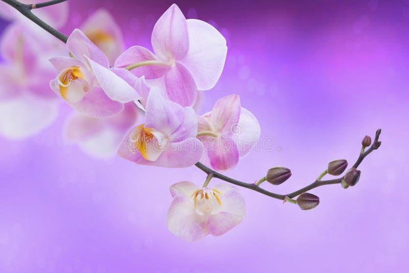 兰花植物。 免版税库存照片