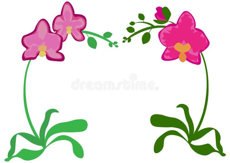 兰花植物兰花桃红色紫罗兰色丁香紫色橙色室内室内植物 设置与芽,绿色叶子,词根生长的三朵 库存例证