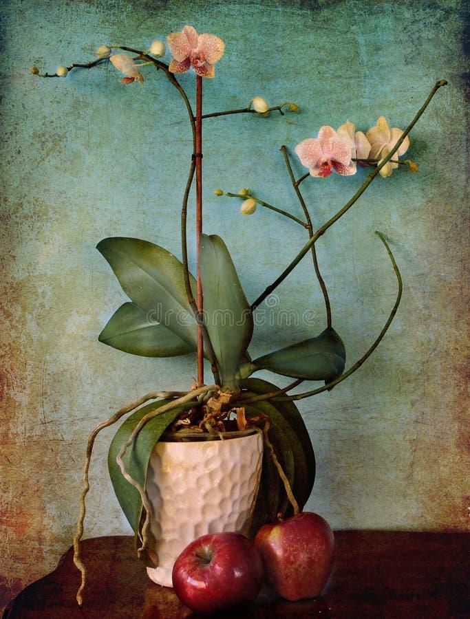 兰花植物和苹果 图库摄影