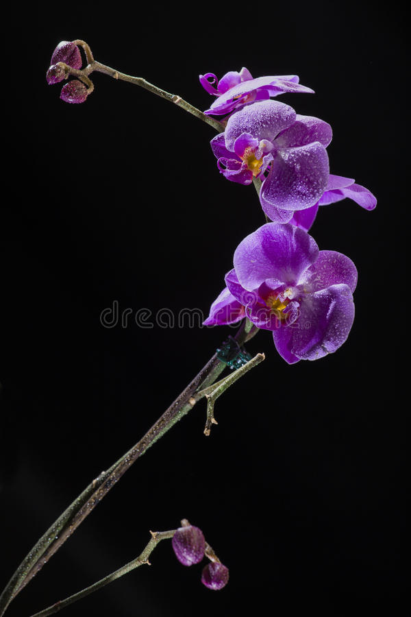 兰花植物 免版税库存照片