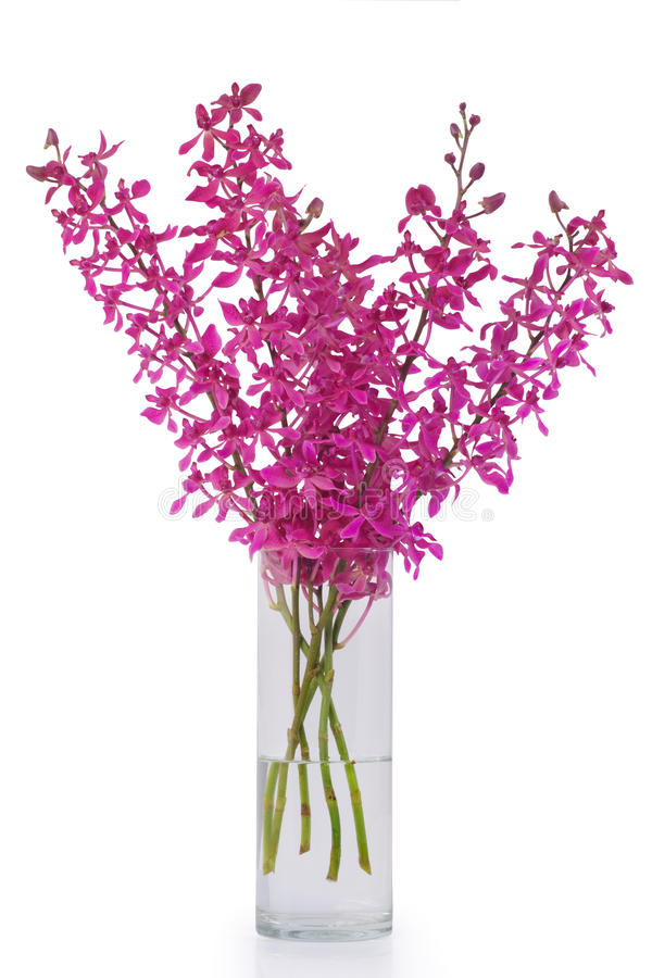 兰花紫色花瓶 免版税库存图片