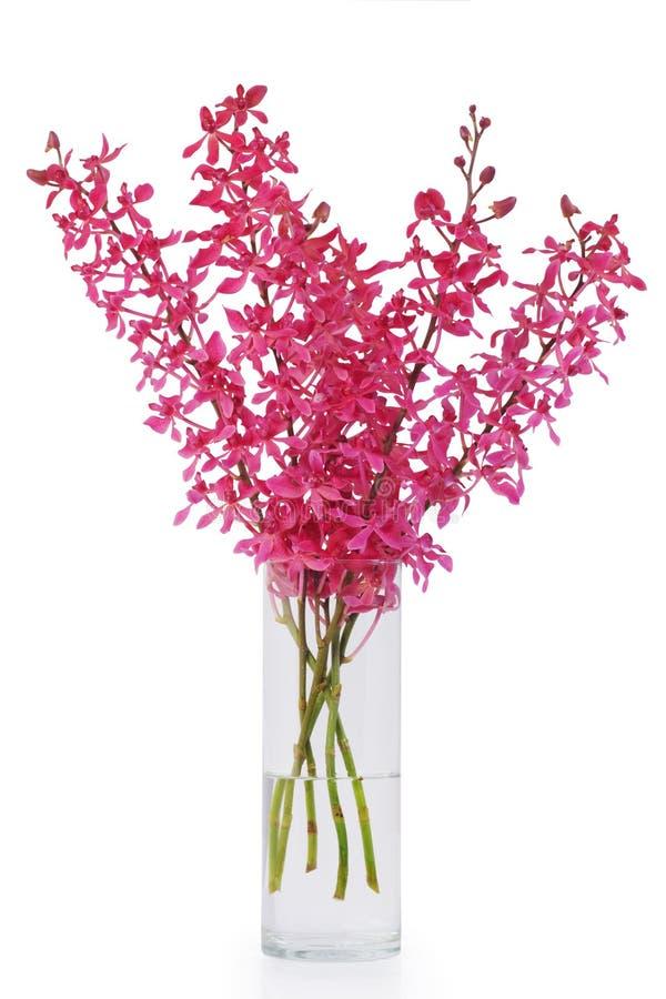 兰花红色花瓶 库存图片