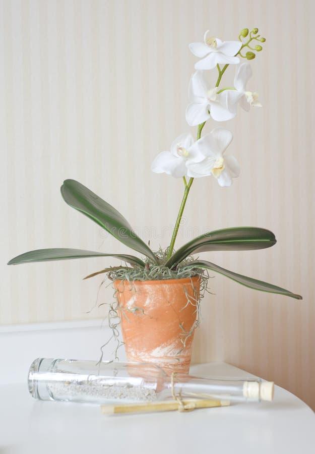 兰花罐赤土陶器白色 图库摄影
