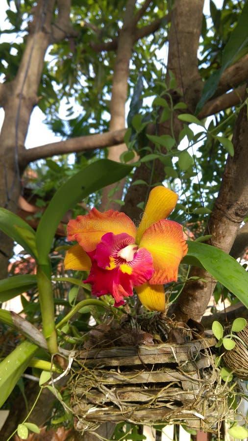 兰花,花,泰国兰花 库存照片