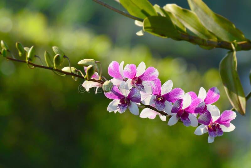 兰花紫色迷离在射击以后 库存照片