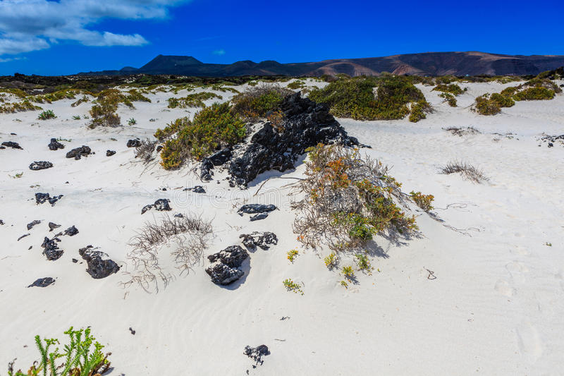 兰萨罗特岛有许多和美丽的海滩 免版税库存照片
