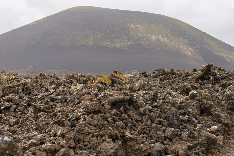 兰萨罗特岛横向 库存图片