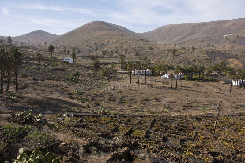 兰萨罗特岛火山的风景  库存图片