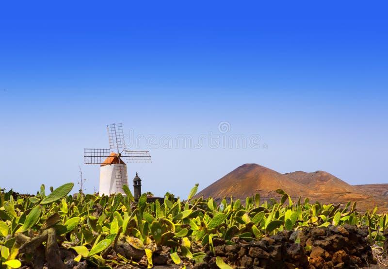 兰萨罗特岛Guatiza仙人掌庭院风车 库存照片