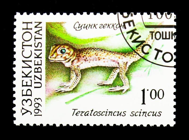 共同的奇迹壁虎(Teratoscincus小蜥蜴类),乌兹别克斯坦动物区系  免版税库存图片