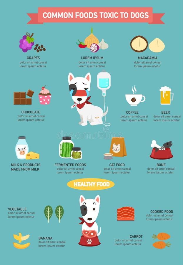 共同的食物毒性对infographic的狗 库存例证