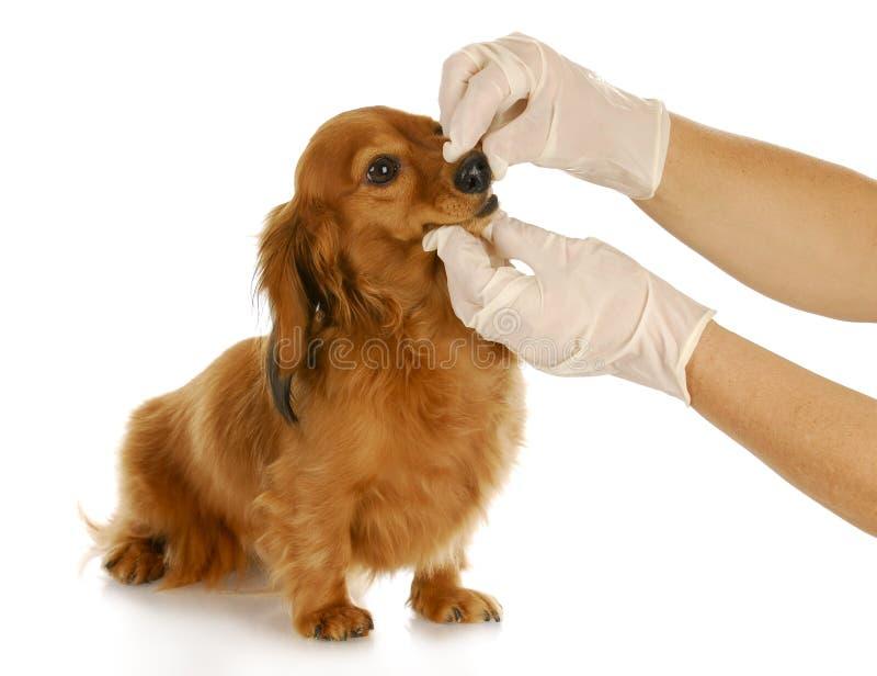 关心兽医 库存图片