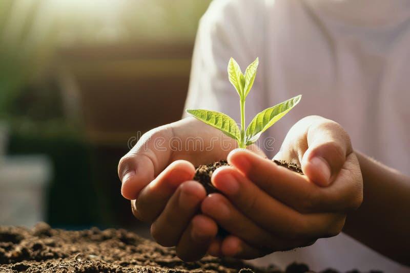关心年幼植物的孩子 拿着在早晨光的手小树 图库摄影