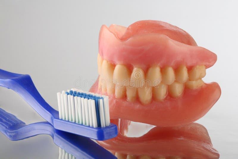 关心牙 库存照片