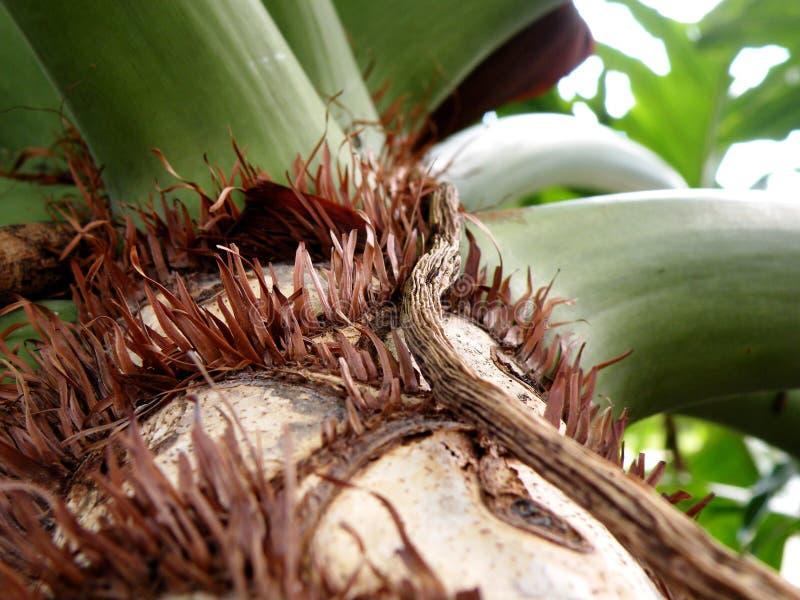 关闭一个树干在佛罗里达沼泽地 免版税库存照片