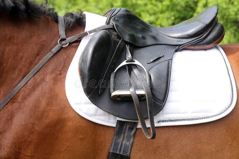 关闭一匹港马在竞争时在马鞍下户外 图库摄影