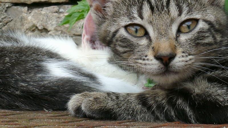 关闭一只幼小疲乏的猫 股票录像