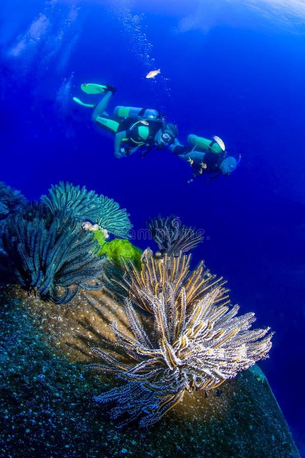 关闭与游泳在背景中的二名轻潜水员的软的珊瑚 库存图片